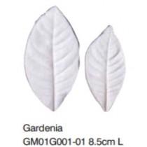梔子花葉-Gardenia L