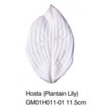玉簪花葉-Hosta (Plantain Lily)