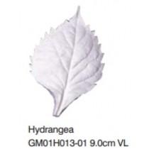 繡球花葉-Hydrangea VL