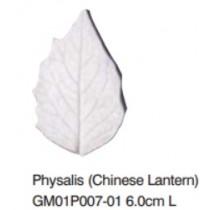 燈籠果葉-Physalis L